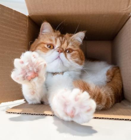 Фото котов в коробках