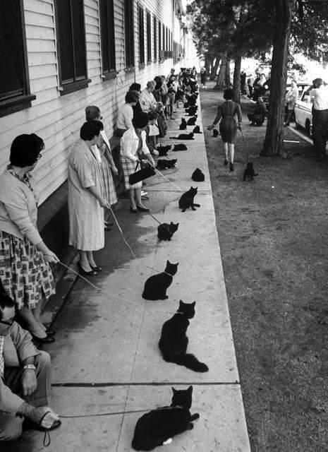 На кастинг прийшли 152 чорних коти