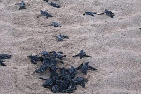 Малые ракушки на берегу