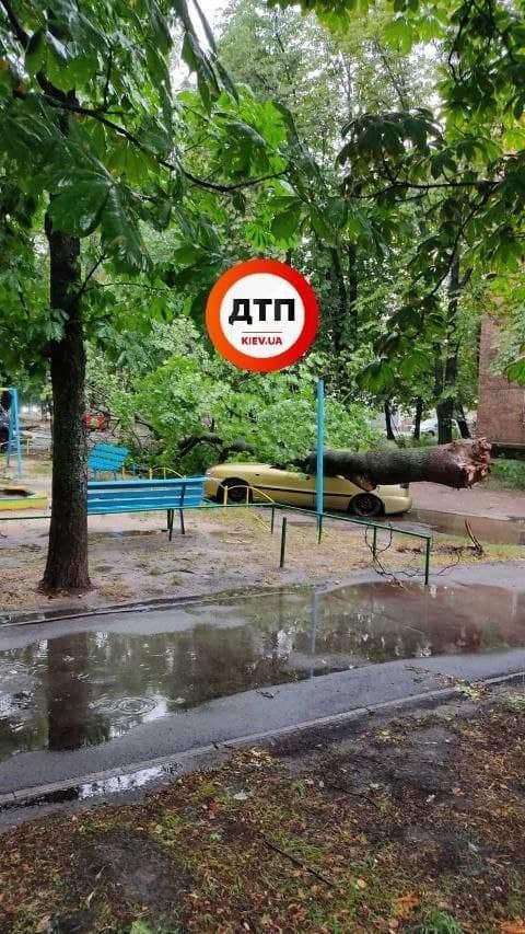 Дерево розчавило авто