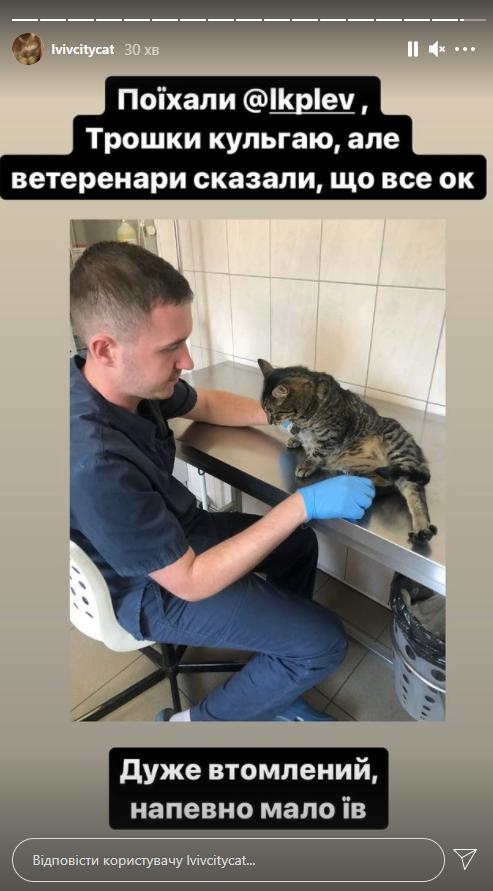 Левчик нарешті вдома: котячий мер Львова повернувся у міськраду