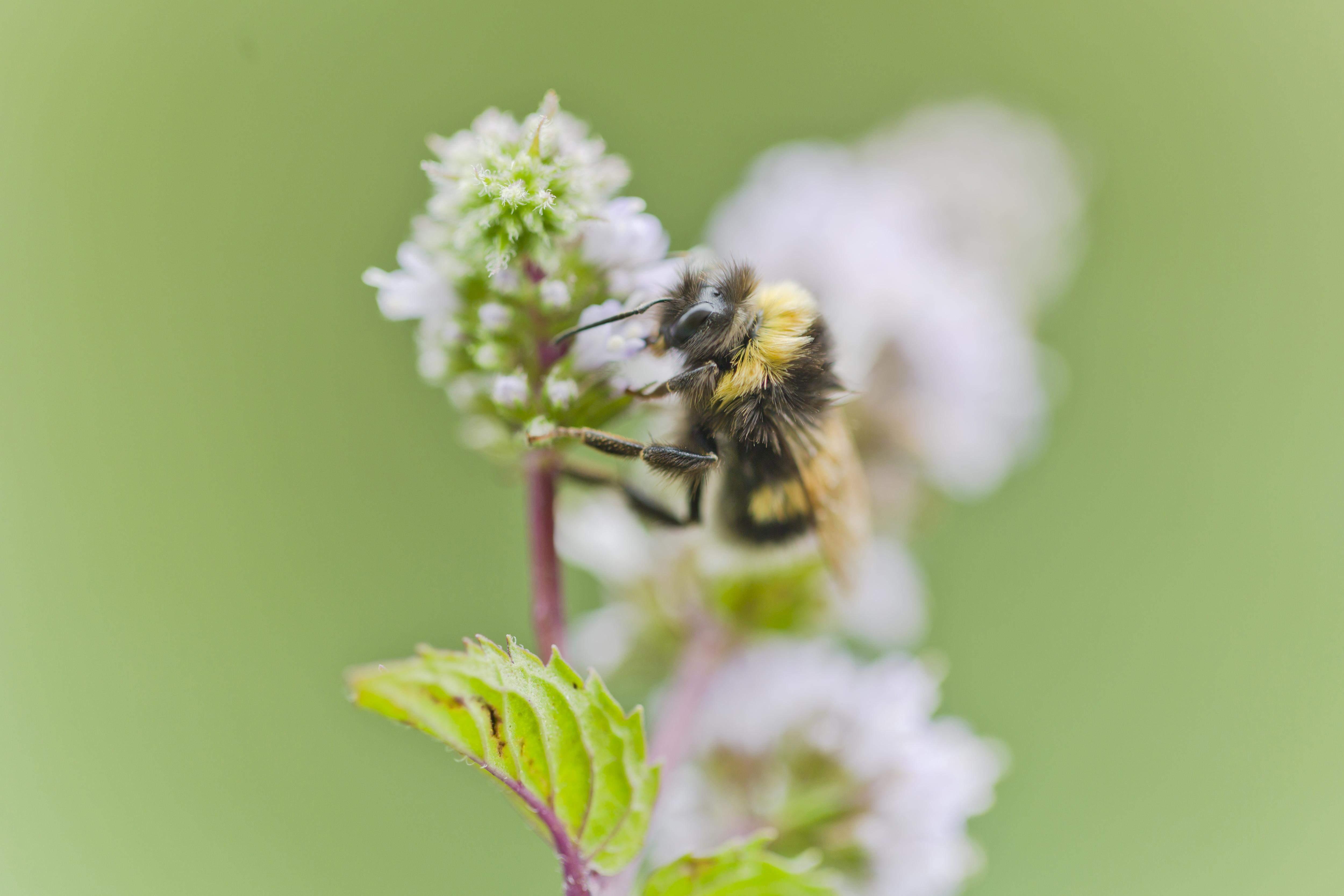 Бджолам треба луки