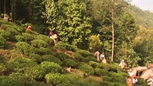 Дарджилинг - главный индийский город чайных плантаций