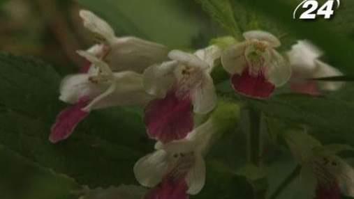 Чудеса світу: Чеські орхідеї, неймовірна Куба та країна-рай Фіджі