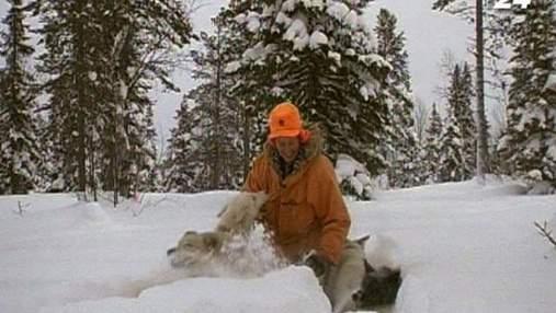 Зимове сафарі з хаскі в упряжці