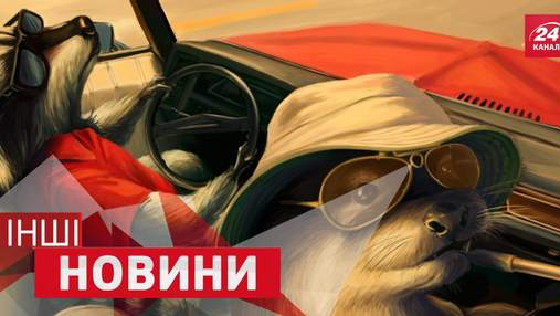 ДРУГИЕ Новости. Как сыграть концерт на автомобильном органе и зачем еноту  крутить педали