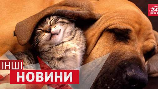 ІНШІ новини. Вічні баталії між собаками та котами. Шварценеггер взяв приклад з Кличка
