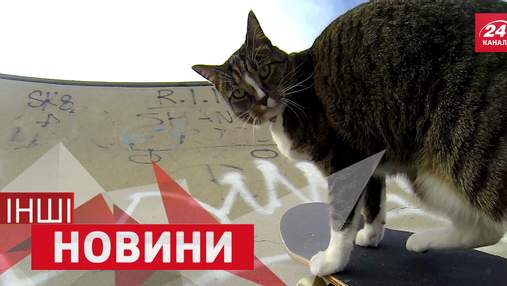 ДРУГИЕ новости. Лучшее. Кот научился кататься на скейте. Бесстрашная женщина поплавала с акулами