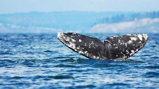 Туристы случайно встретили кита в обычной реке: захватывающее видео