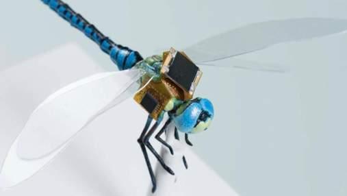Живу комаху перетворили на здатного до польотів кіборга з сонячними батареями