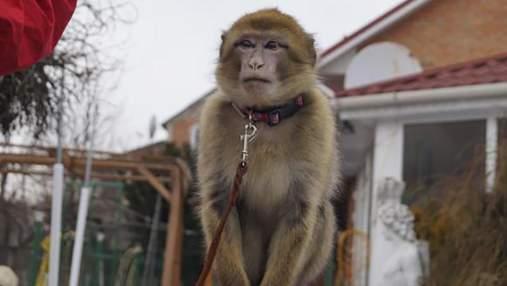 Втеча із зоопарку у Вінниці: мавпа збила з пантелику доглядальників