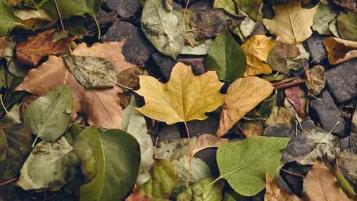 17 листопада – яке сьогодні свято та що не можна робити у цей день