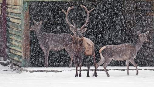 Як перший сніг зустріли незвичні жителі Києва: милі фото