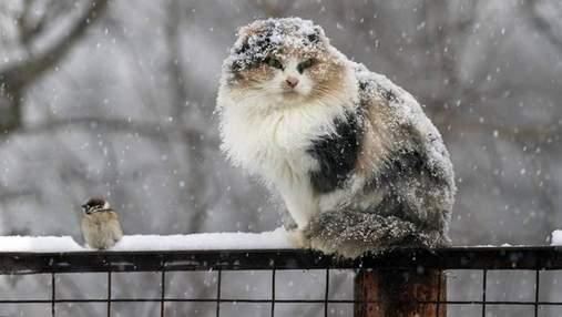 Прогноз погоди на 12 грудня: сніг з дощами охоплять більшу частину України