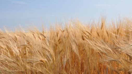 """""""Укрлендфарминг"""" заявляет, что их посевы хорошо пережили зиму"""