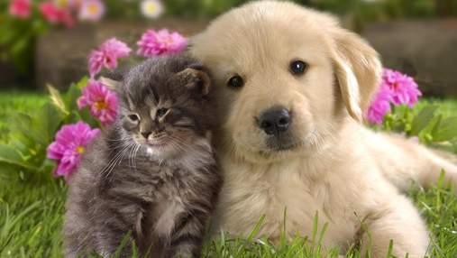 Коти чи собаки – хто краще впливає на господарів? – Die Welt