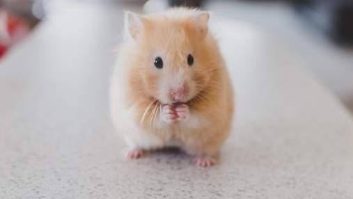 Вчені вперше оживили мертвий мозок миші на тривалий час