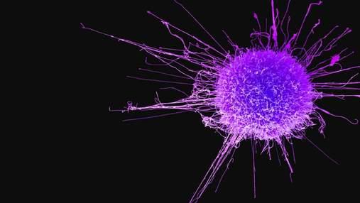 Лекарственные средства научились направлять в опухоли с помощью звука
