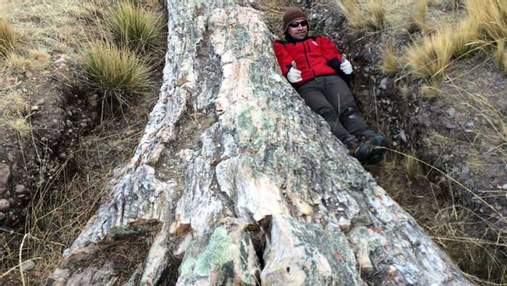 Уникальная находка: в Перу нашли дерево возрастом более 10 миллионов лет – фото