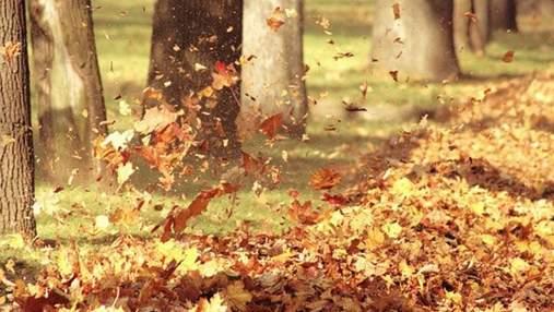 Майже на 2 градуси: листопад у Києві був теплішим за кліматичну норму