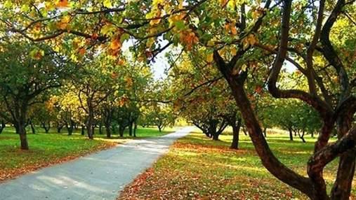 Осень в Киеве стала самой теплой за 140 лет