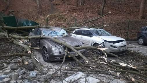 Повалені дерева й потрощені автівки: наслідки буревію у Львові – фото