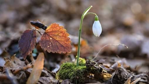 Якою буде погода у Києві у перший весняний тиждень: прогноз синоптиків