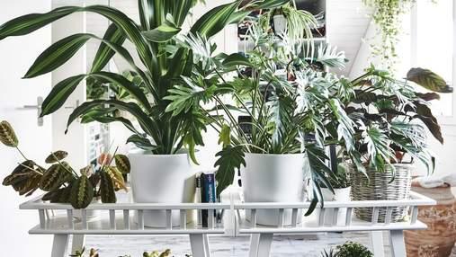 Зелень у домі: 5 рослин, які оцінять новачки