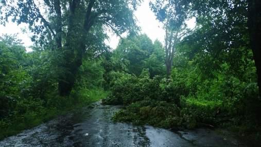 Вітер повалив 11 дерев: у Львові вирувала негода – фото