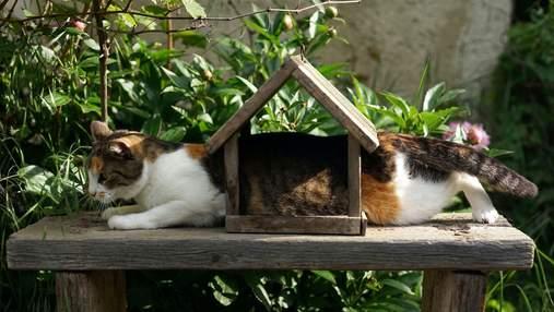 Забавно: 5 способов издеваться над людьми, которые используют коты