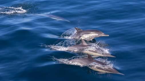 Мертві дельфіни посеред пляжів: мережу шокували фото з окупованого Криму
