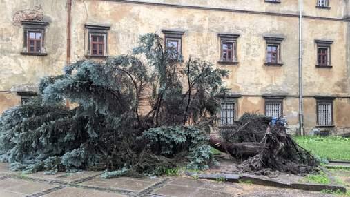 Львів поплив після негоди: злива повалила дерева, авто у воді – фото, відео