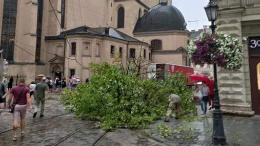 Повалило понад пів сотні дерев і затопило будинки: підсумували наслідки грози у Львові – фото