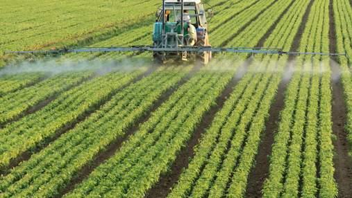 Эксперименты с артишоком: украинские аграрии противостоят глобальному потеплению