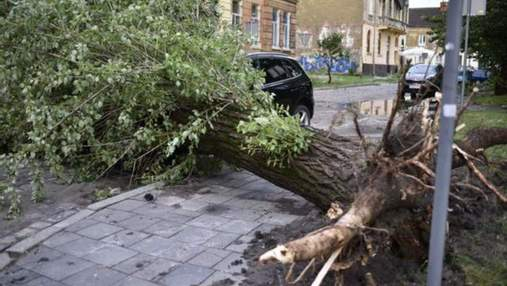 Убытки– 23 миллиона гривен: во Львове еще не оправились от страшного урагана