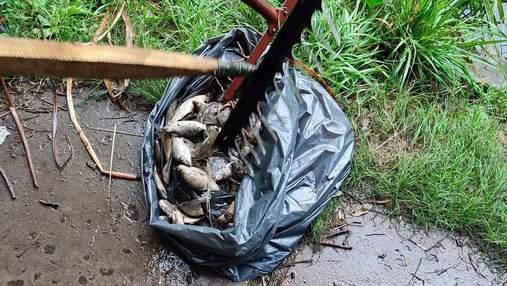 Загибель птахів та риби у ставках Голосіївського парку: експерти підтвердили отруєння хімікатами