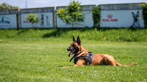 Шукають майже місяць: у Києві зник собака, якого власники залишили кінологу на перетримку – фото