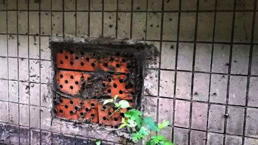 Тараканы лезут сквозь балконы: сняли нашествие вредителей в Киеве – жуткое видео