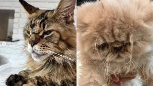 Пекло для тварин, – відвідувачку львівського Cat Cafe вразив стан котів у закладі