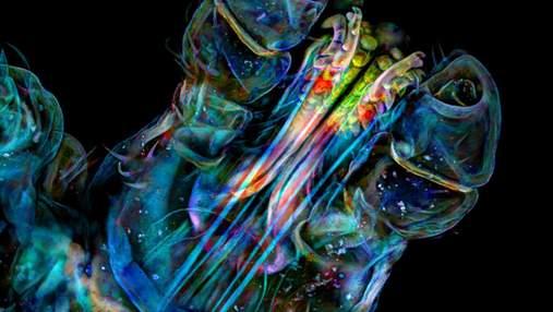 Голова клеща и крылья бабочки: 10 удивительных фото, раскрывающих красоту микроскопического мира