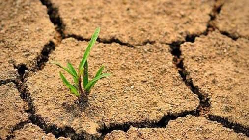 Через 30 лет часть Украины может стать пустыней, – ученый
