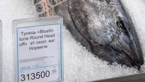 Тунец за 300 тысяч: в Киеве продают рыбу стоимостью, как авто