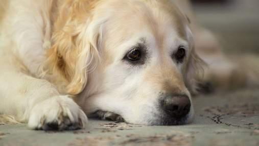 Оставил голодной, потому что хотел спать: киевлян возмутила история о брошенной собаке