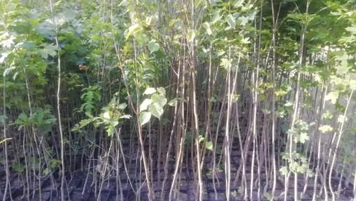 В Киеве дарят саженцы деревьев: как получить