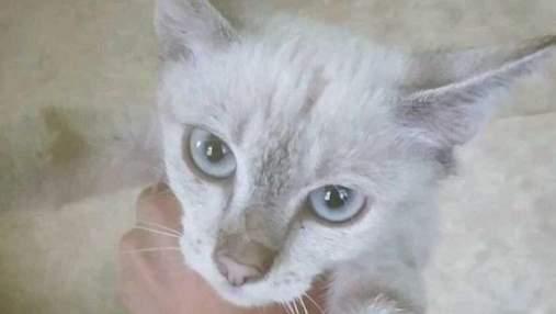 Кішка, яку врятували в київському метро, втекла від волонтерів