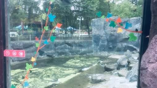 В киевском зоопарке треснувшее стекло в вольере заклеили аппликацией