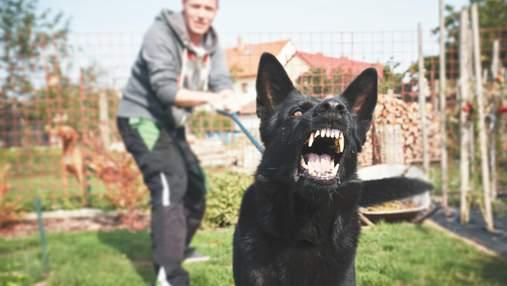 Скажений пес покусав господиню на Прикарпатті: у місті ввели карантин