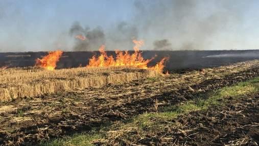 На Буковине поджигателей травы ищут с помощью дрона