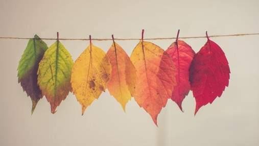 Солнечная осень продолжается: прогноз погоды на 26 октября