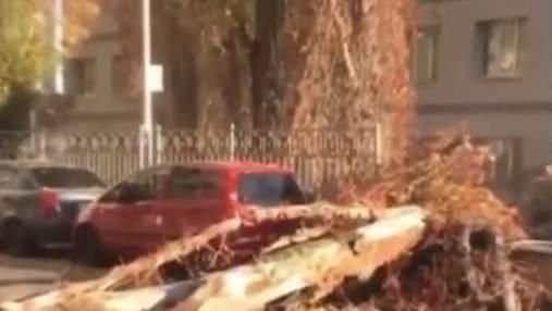 На Русановке гигантский тополь едва не убил двух человек: жуткие кадры падения